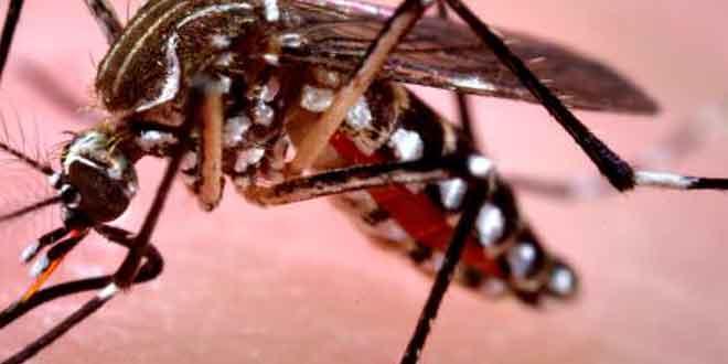 डेंगू के टीके का इंसानों पर टेस्ट 100 % कामयाब रहा