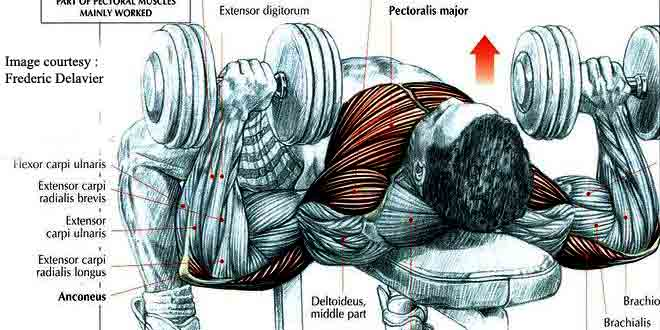 flat-bench dumbbell press is one of the most powerful exercise of chest.