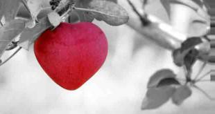 दिल की सुरक्षा करें