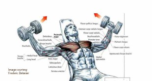 Right way to do incline dumbbell fly in hindi