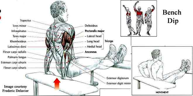 how to do bench dip for triceps in hindi