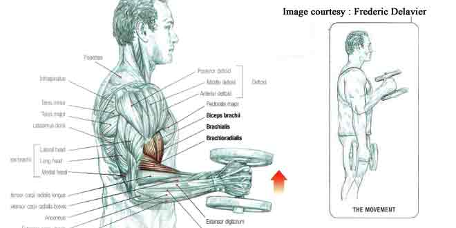 How to do dumbbell hammer curl in hindi