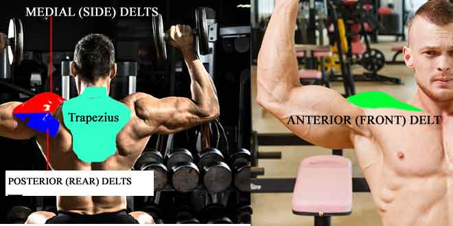4 muscles of shoulder and their workout in hindi
