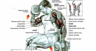 how to do seated dumbbell curl for biceps; hindi