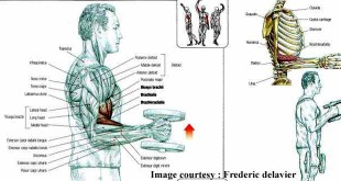 How to do biceps hammer curl hindi