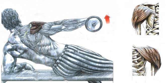 आज हम शोल्डर की एक्सरसाइज लाइंग वन आर्म लेटरल रेज (Lying One-Arm Lateral Raise) के बारे में बात करेंगे। यह एक्सरसाइज फ्रंट, मिडल और रियर डेल्ट तीनों पर काम करती है।
