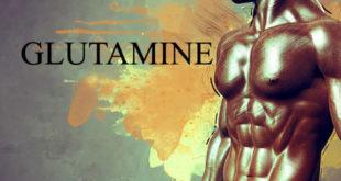 ग्लूटामाइन (Glutamine) को वर्कआउट के बाद लेना चाहिए। वैसे इसे कब लेना चाहिए, इस बारे में कई तरह की राय लोग देते हैं।